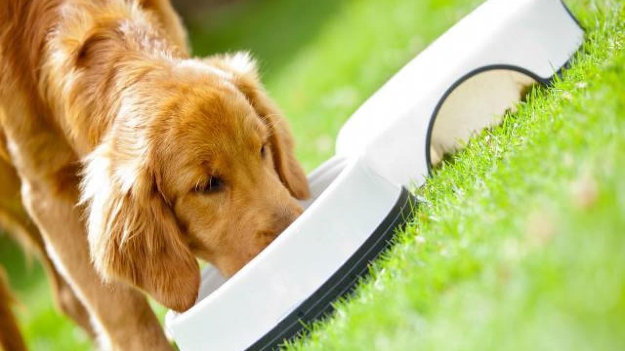 17717.comment-bien-nourrir-mon-chien.w_1280.h_720.m_zoom.c_middle.ts_1339149415.
