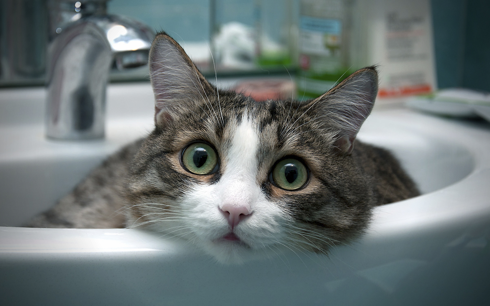 Faut-il laver son chat?