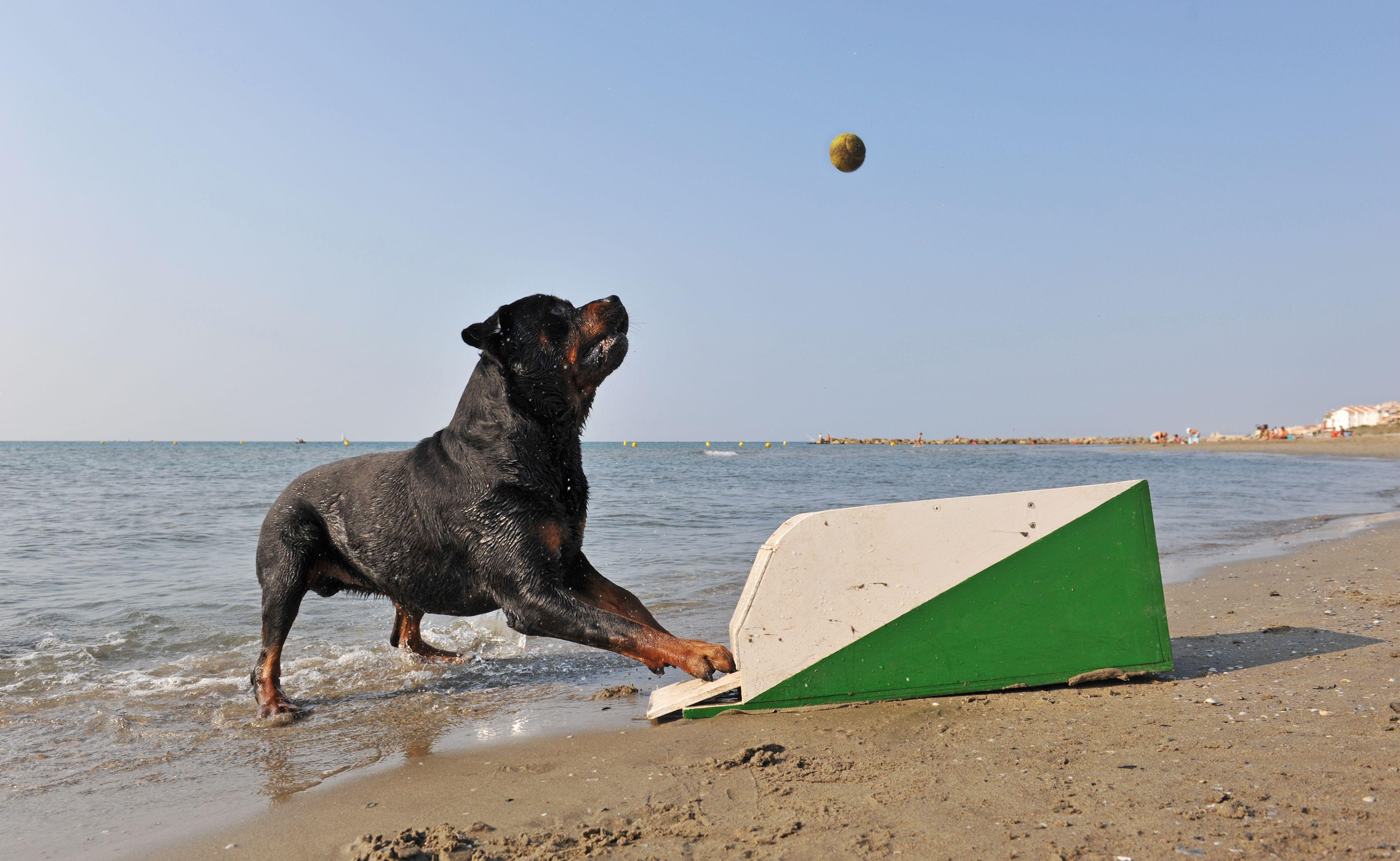 Vacances avec son chienen bateau : quelles précautions?
