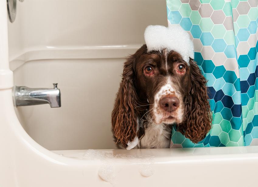 laver-chien